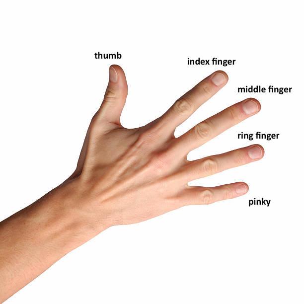 英語でそれぞれの指の呼び方   dawaan